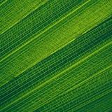 Абстрактная творческая предпосылка картины лист ладони Стоковая Фотография RF