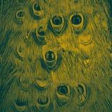 Абстрактная творческая предпосылка пер павлина Стоковое фото RF