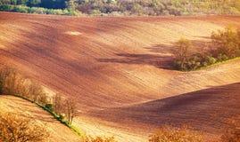 Абстрактная текстура картины свертывать волнистые поля весной Sprin Стоковая Фотография