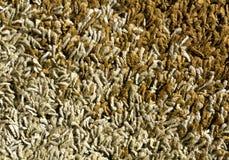 абстрактная текстура ковра цвета Стоковое Фото