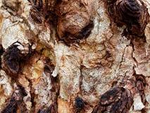 Абстрактная текстура конца вверх по коре дерева Стоковые Изображения