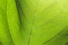 Абстрактная текстура листьев Созданный естественным Стоковая Фотография