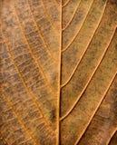 Абстрактная текстура листьев Стоковое Изображение RF