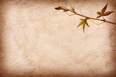 абстрактная текстура листьев grunge предпосылки Стоковое фото RF