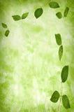 абстрактная текстура листьев grunge предпосылки Стоковое Фото