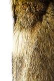 абстрактная текстура шерсти конца предпосылки вверх Мех собаки енота Стоковое Изображение