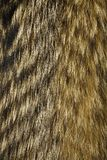 абстрактная текстура шерсти конца предпосылки вверх Мех собаки енота Стоковые Изображения