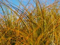 абстрактная трава конца пляжа вверх Стоковая Фотография