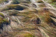 абстрактная трава предпосылки Стоковое фото RF