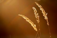абстрактная трава Стоковое Изображение