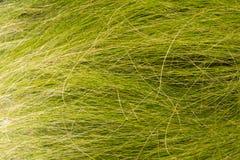 абстрактная трава Стоковые Изображения