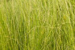 абстрактная трава Стоковое фото RF