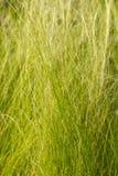 абстрактная трава Стоковое Фото