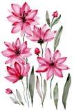 Абстрактная флористическая предпосылка Красивые розовые цветки при черные тычинки изолированные на белой предпосылке самана корре Стоковые Изображения