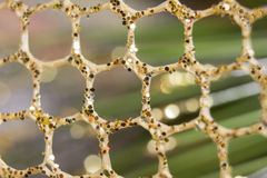 Абстрактная фотография предпосылки Фантазия плекса футуристическая Стоковое Изображение RF