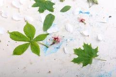 Абстрактная флористическая предпосылка в типе сбора винограда листья на старой белой предпосылке Стоковое Изображение