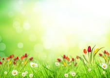 Абстрактная флористическая предпосылка Стоковое Изображение