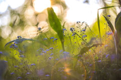 Абстрактная яркая запачканная предпосылка с весной и лето с малыми голубыми цветками и заводами С красивым bokeh в солнечном свет стоковые изображения rf