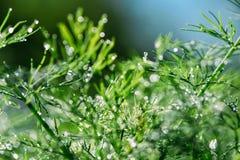 Абстрактная defocused, запачканная естественная флористическая зеленая предпосылка с красивым bokeh, росой на траве стоковая фотография