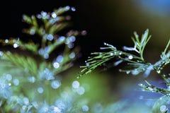 Абстрактная defocused, запачканная естественная флористическая зеленая предпосылка с красивым bokeh, росой на траве стоковое фото