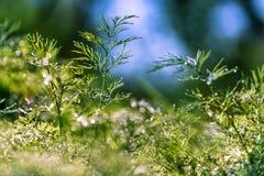 Абстрактная defocused, запачканная естественная флористическая зеленая предпосылка с красивым bokeh, росой на траве стоковые фото