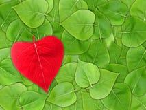 абстрактное Валентайн листьев предпосылки Стоковая Фотография