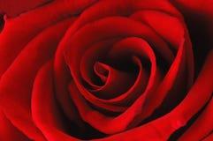 абстрактное глубокое - красный цвет поднял Стоковая Фотография RF