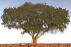 Абстрактное дерево в отражении воды Стоковое Изображение RF