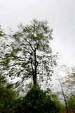 Абстрактное дерево Стоковые Фотографии RF