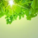 Абстрактное естественное Стоковое фото RF