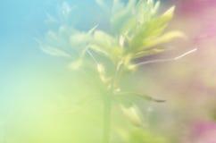 абстрактное изображение графика цвета предпосылки Стоковая Фотография RF