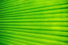 Абстрактное изображение зеленых лист ладони для предпосылки Стоковая Фотография