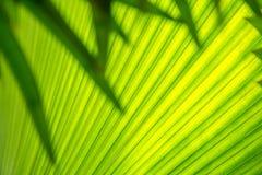 Абстрактное изображение зеленых лист ладони для предпосылки Стоковые Фотографии RF