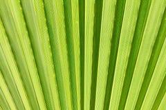 Абстрактное изображение зеленых лист ладони Стоковое Фото