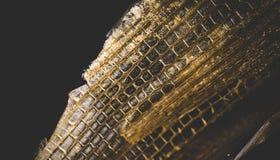 Абстрактное изображение макроса мертвых клеток завода стоковые изображения rf
