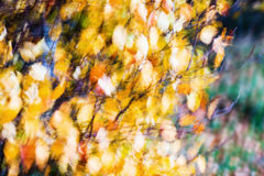 Абстрактная нерезкость листьев осени Стоковое Изображение RF