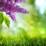 абстрактное лето весны предпосылок Стоковые Изображения RF
