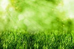 абстрактное лето предпосылок Стоковая Фотография RF