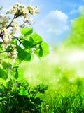 абстрактное лето предпосылок Стоковое Изображение RF
