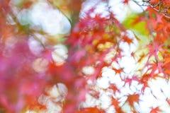 Абстрактное неясное изображение красного и оранжевого кленового листа в среднем autum Стоковое Изображение RF