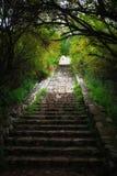 Абстрактное низкое ключевое изображение древесин мечтательной тайны fairy и bokeh яркого блеска освещает фильтрованное изображени Стоковая Фотография