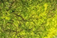 Абстрактное отражение дерева в реке Стоковые Фотографии RF