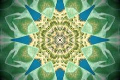 Абстрактное отражение кактуса Стоковые Изображения RF