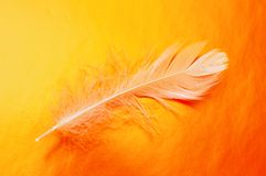 абстрактное перо Стоковые Фото