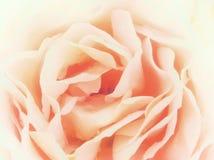 Абстрактное романтичное подняло Стоковая Фотография