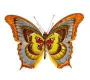 абстрактное собрание бабочек Стоковое фото RF
