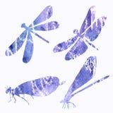 Абстрактное собрание силуэтов dragonfly в акварели Стоковые Изображения