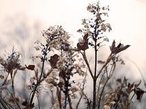 абстрактное флористическое изображение Стоковая Фотография RF