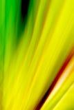 абстрактное цветастое Стоковые Изображения