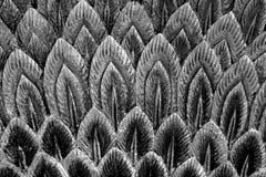 Абстрактное черно-белое перо Стоковые Изображения RF